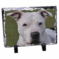 American Staffordshire Bull Terrier Dog Photo Slate Christmas Gift Idea