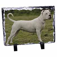 American Staffordshire Bull Terrier Dog Photo Slate Photo Ornament Gift