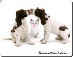 Cocker Spaniels and Kitten with Love, AD-SC10u