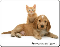 Cocker Spaniel and Kitten with Love, AD-SC14u