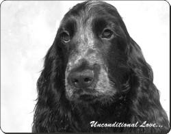 Cocker Spaniel with Love, AD-SC1cu