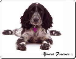 Blue Roan Cocker Spaniel with Sentiment, AD-SC21