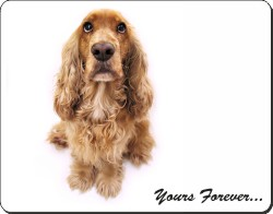 Cocker Spaniel with Sentiment, AD-SC22