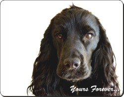Black Cocker Spaniel with Sentiment, AD-SC56
