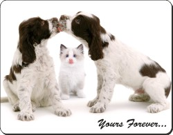 Cocker Spaniels and Kitten with Sentiment, AD-SC57