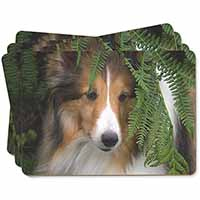 Shetland Sheepdog Picture Placemats in Gift Box