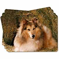 Sheltie on Hay Bale Picture Placemats in Gift Box