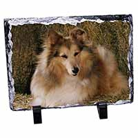 Sheltie on Hay Bale Photo Slate Christmas Gift Ornament