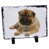 Bear Coated Shar-Pei Puppy Dog Photo Slate Christmas Gift Idea