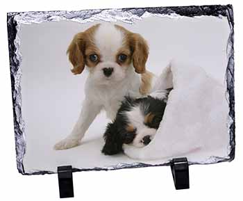 Cavalier King Charles Spaniels Photo Slate Photo Ornament Gift