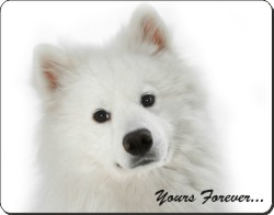 Samoyed Puppy with Sentiment, AD-SO75