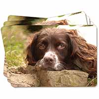 Springer Spaniel Dog Picture Placemats in Gift Box