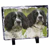 Springer Spaniel Dogs Photo Slate Christmas Gift Idea