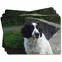 Black and White Springer Spaniel Picture Placemats in Gift Box