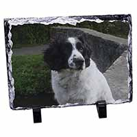 Black and White Springer Spaniel Photo Slate Photo Ornament Gift