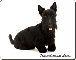 Black Scottish Terrier with Love, AD-ST2u