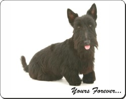 Black Scottish Terrier with Sentiment, AD-ST4