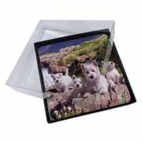 4x West Highland Terrier Dogs Picture Table Coasters Set in Gift Box