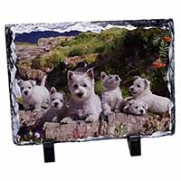 West Highland Terrier Dogs Photo Slate Christmas Gift Idea