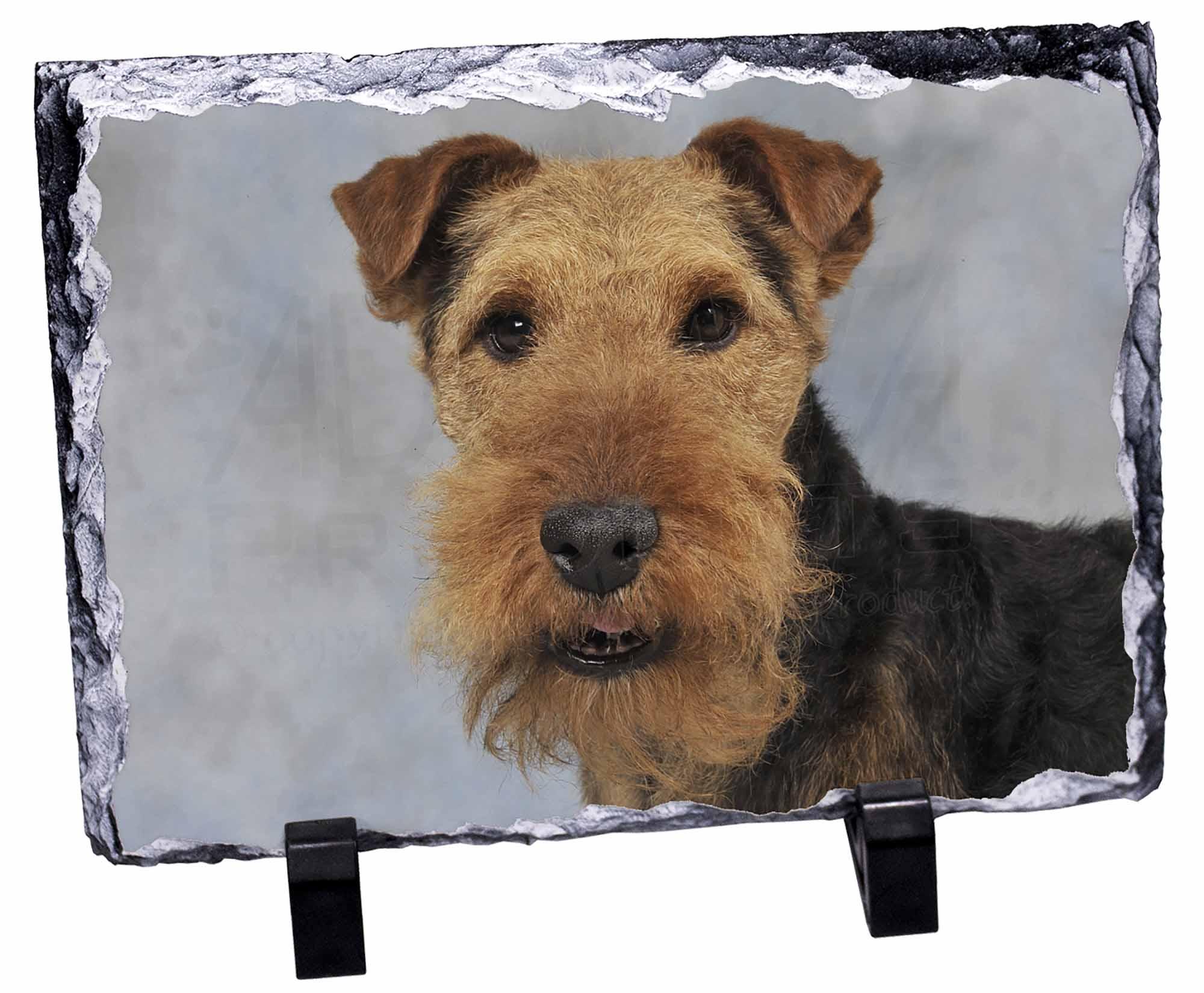 walisischer terrier hund foto schiefer weihnachtsgeschenk. Black Bedroom Furniture Sets. Home Design Ideas