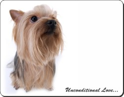 Yorkshire Terrier with Love, AD-Y1U