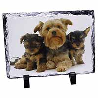 Yorkshire Terrier Dogs Photo Slate Photo Ornament Gift