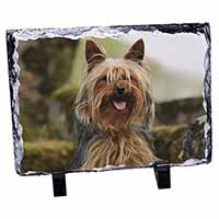 Yorkshire Terrier Dog Photo Slate Christmas Gift Ornament