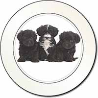 Yorkipoo Puppies Car/Van Permit Holder/Tax Disc Gift