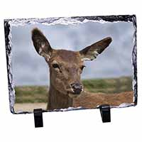 A Pretty Red Deer Photo Slate Photo Ornament Gift