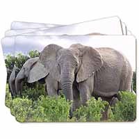 African Elephants Picture Placemats in Gift Box