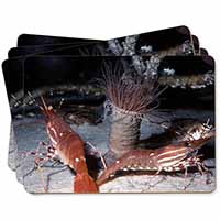 Sea Shrimp Picture Placemats in Gift Box