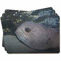 Ugly Fish Picture Placemats in Gift Box