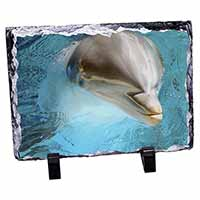 Dolphin Close-Up Photo Slate Photo Ornament Gift
