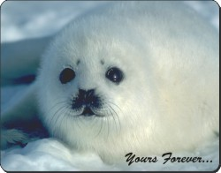 White Snow Seal with Sentiment, AF-S14