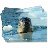 Sea Lion in Ice Water Picture Placemats in Gift Box
