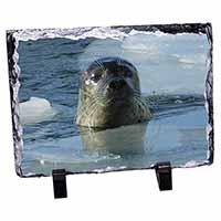 Sea Lion in Ice Water Photo Slate Christmas Gift Idea