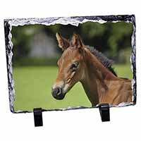Pretty Foal Horse Photo Slate Christmas Gift Ornament