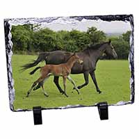 Mare with Newborn Foal Photo Slate Christmas Gift Idea