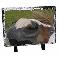 Cheeky Shetland Pony Photo Slate Photo Ornament Gift
