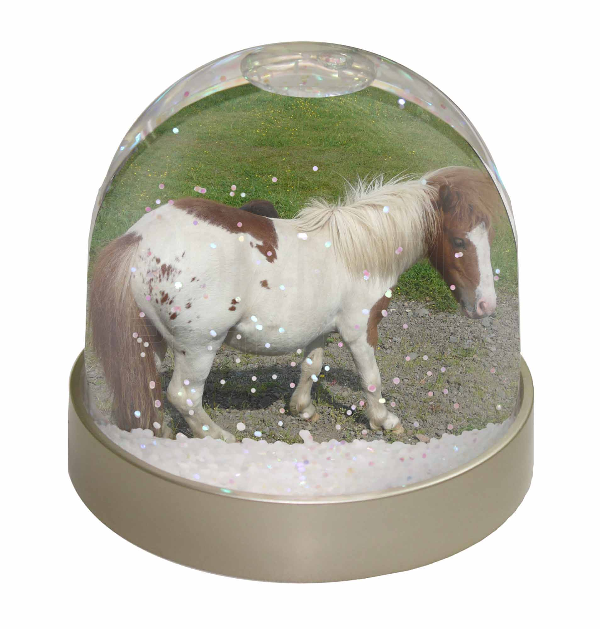 Details about Shetland Pony Photo Snow Globe Waterball Stocking Filler  Gift, AHC-3GL