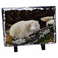 Albino Hedgehog Wildlife Photo Slate Photo Ornament Gift