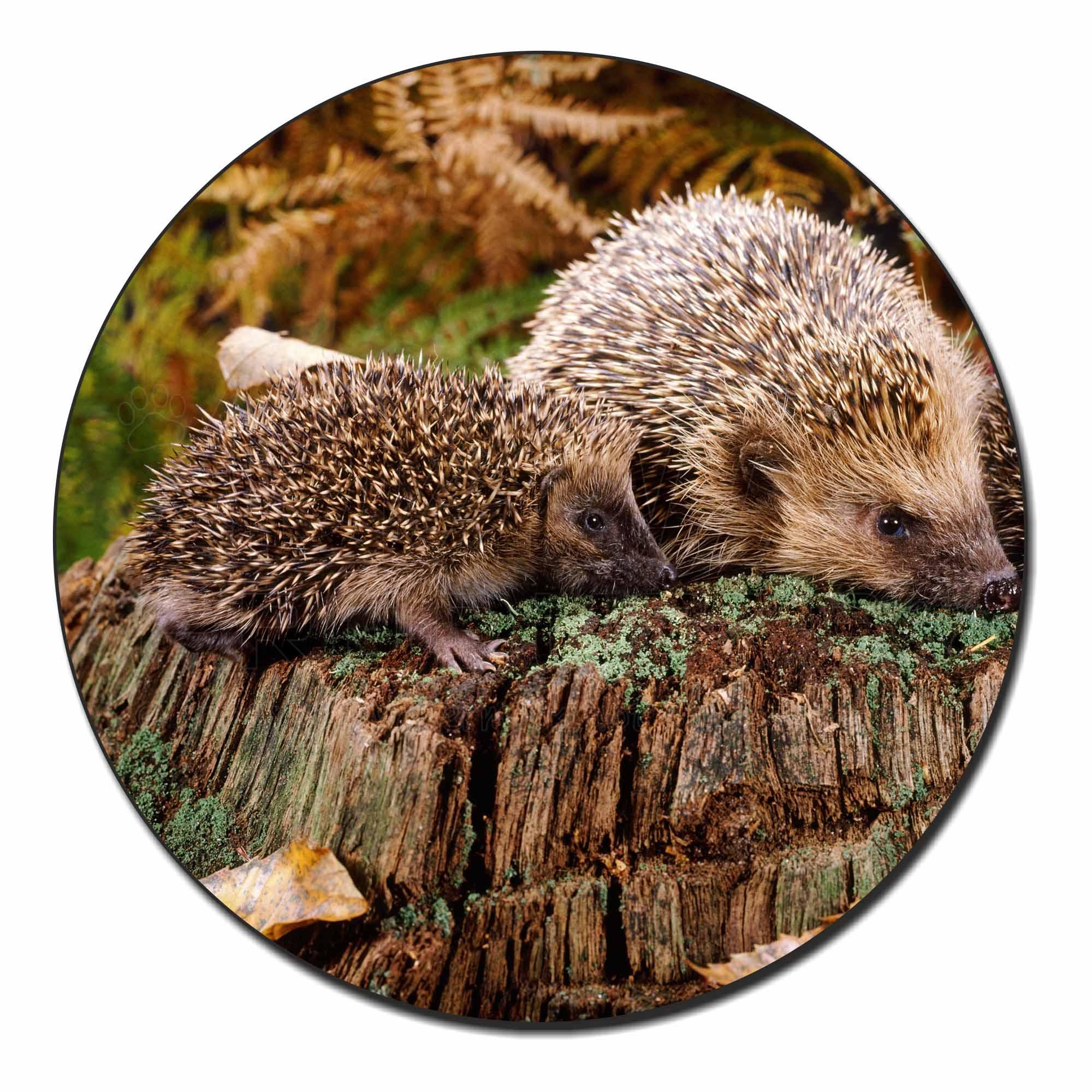 Mother and Baby Hedgehog Fridge Magnet Stocking Filler Christmas Gift AHE-5FM