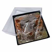 4x Hippopotamus, Hippo Picture Table Coasters Set in Gift Box