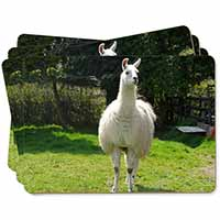 Llama Picture Placemats in Gift Box