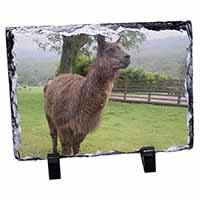 Llama Photo Slate Photo Ornament Gift