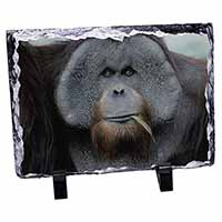 Handsome Orangutan Photo Slate Photo Ornament Gift