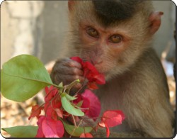 Monkey with Flowers, AM-3
