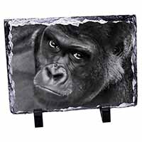 Handsome Silverback Gorilla Photo Slate Christmas Gift Idea