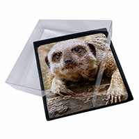 4x Cheeky Meerkat Picture Table Coasters Set in Gift Box
