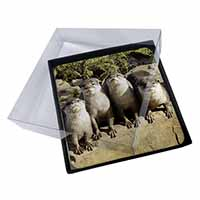 4x Cute Otters Picture Table Coasters Set in Gift Box